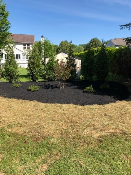 Customer 2 lawn care (after)