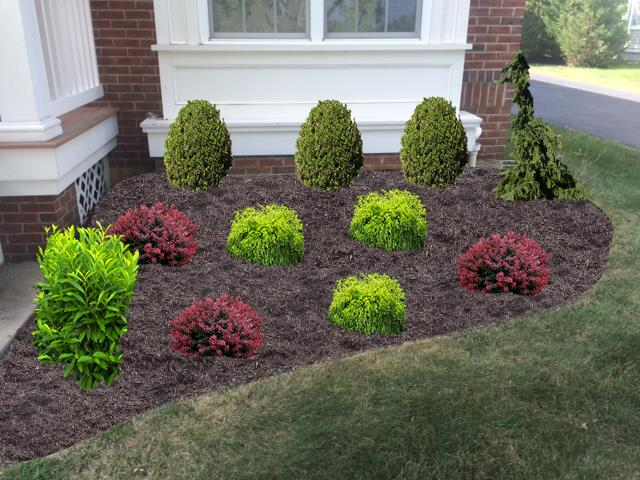 Foundation shrubs