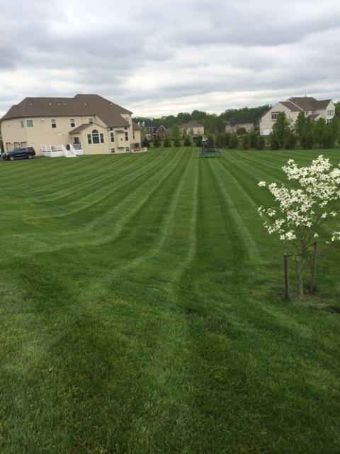 Lawn-lush