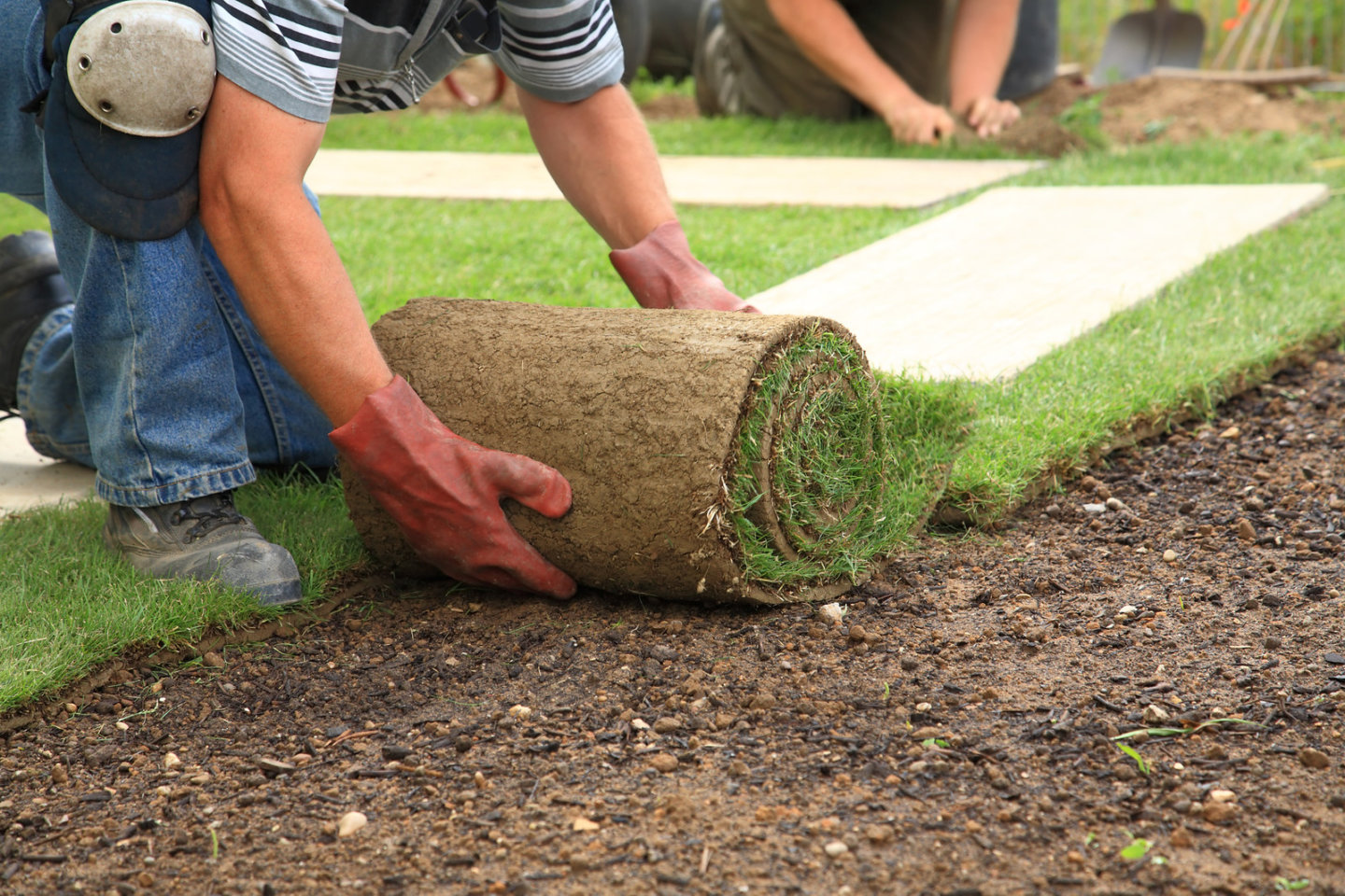 Installation of Sod