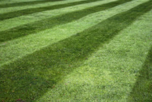 Bohonyi Landscaping Lawn Treatment