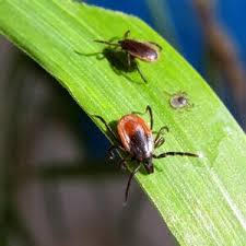 Insect-control-services-