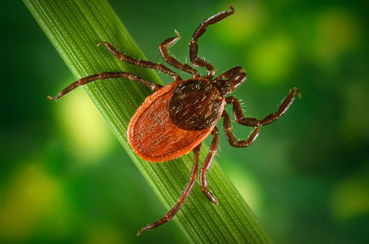 Bohonyi Landscaping tick and mosquito control