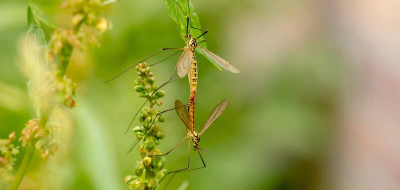 Mosquito - Tick Control