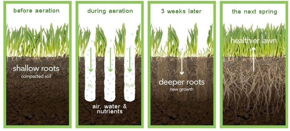 Lawn Core Aeration - Bohonyi Landscaping